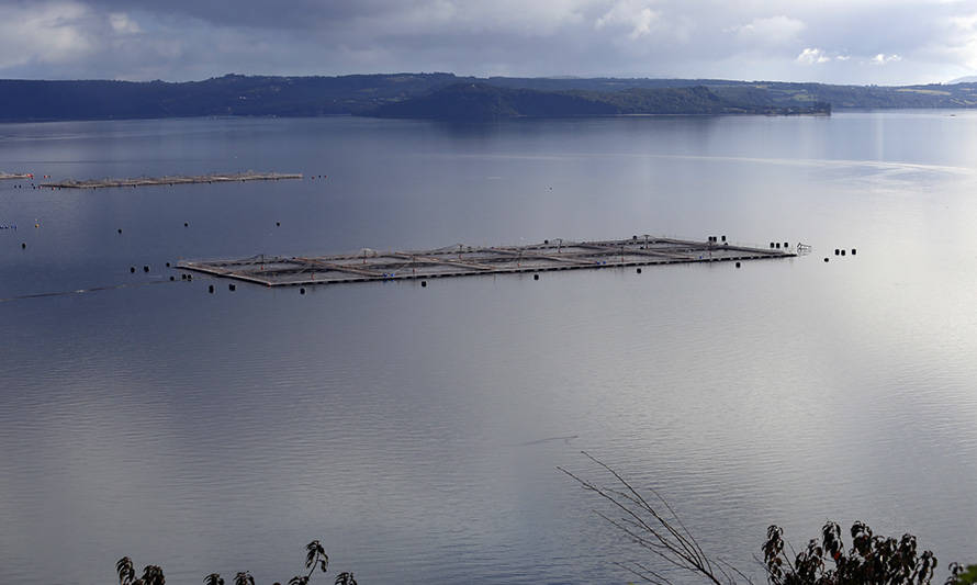 Multiexport Foods cifra en 83 toneladas la biomasa perdida tras mortandad de peces en Chiloé